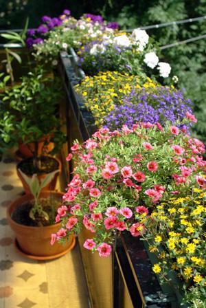 virágos terasz
