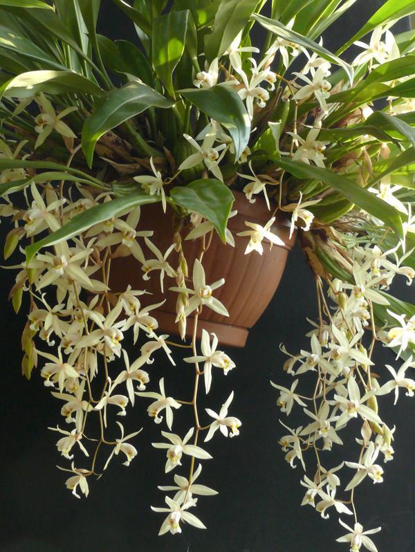 Orchidea és Bromélia Kiállítás