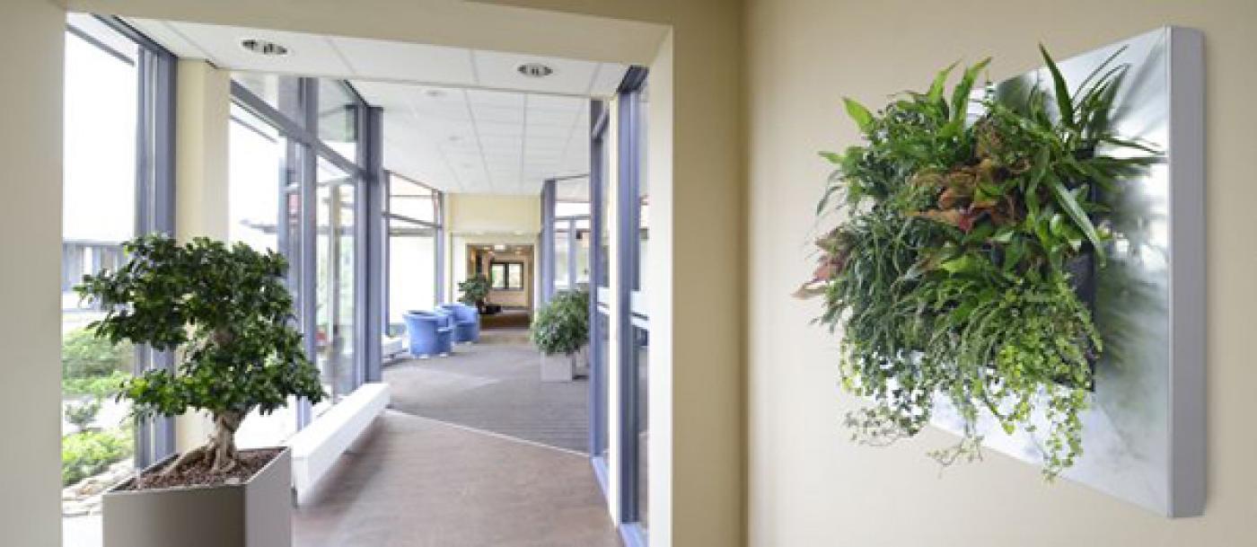 Középpontban a növények - Lakáskultúra magazin