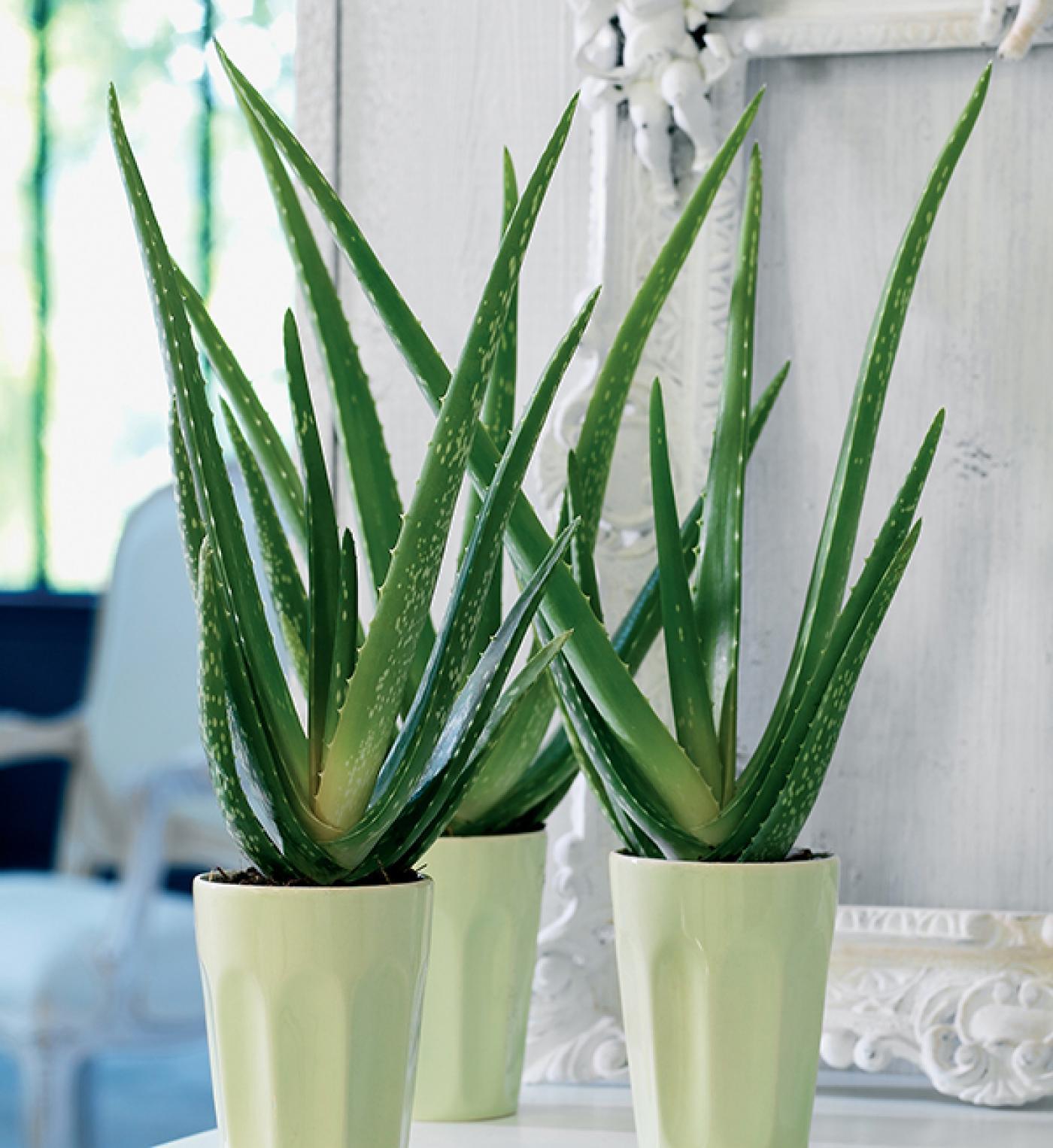 Van olyan hogy t k letes szoban v ny lak skult ra magazin for Ou acheter plante interieur
