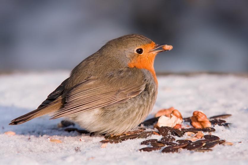 Hogyan tisztítsuk meg a kolibri etetőt