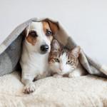 Így tartsunk a lakásban háziállatot!