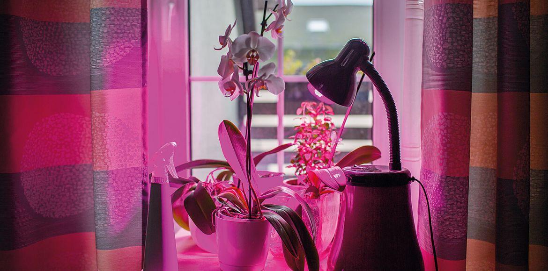 növénylámpa