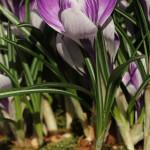húsvét dekoráció