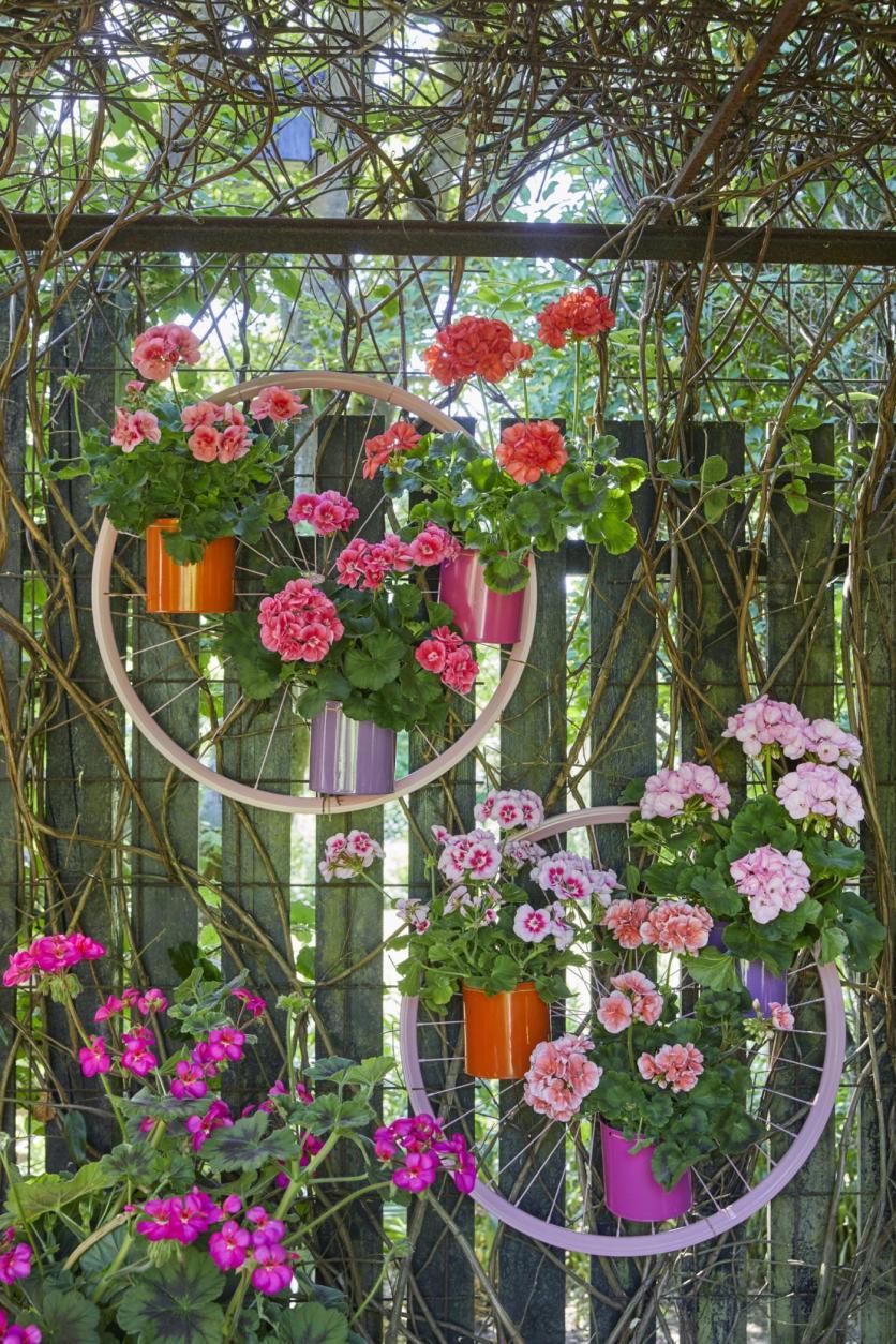 kreatív kert, kertészkedés, muskátli, balkon, ületés