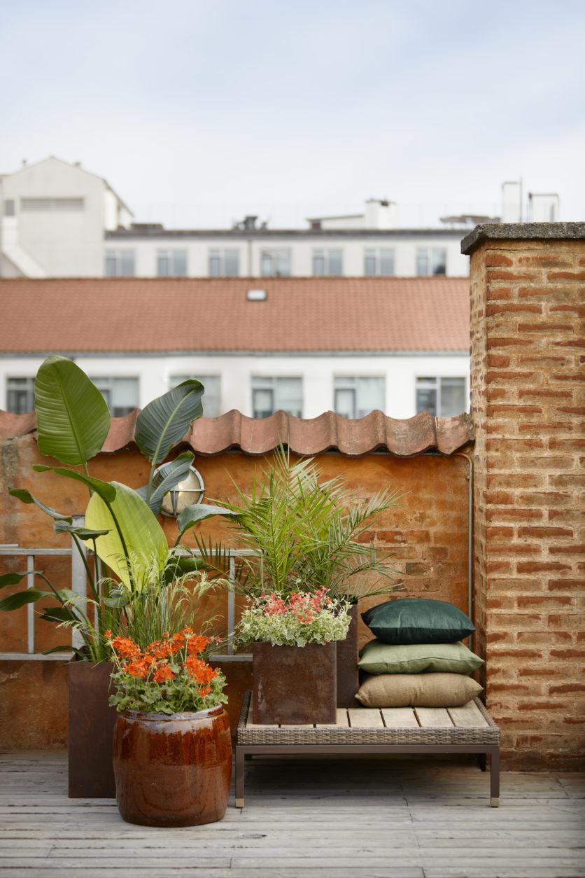 muskátli, kert, kertészkedés, dekoráció, balkonláda, kertész, kertrendezés