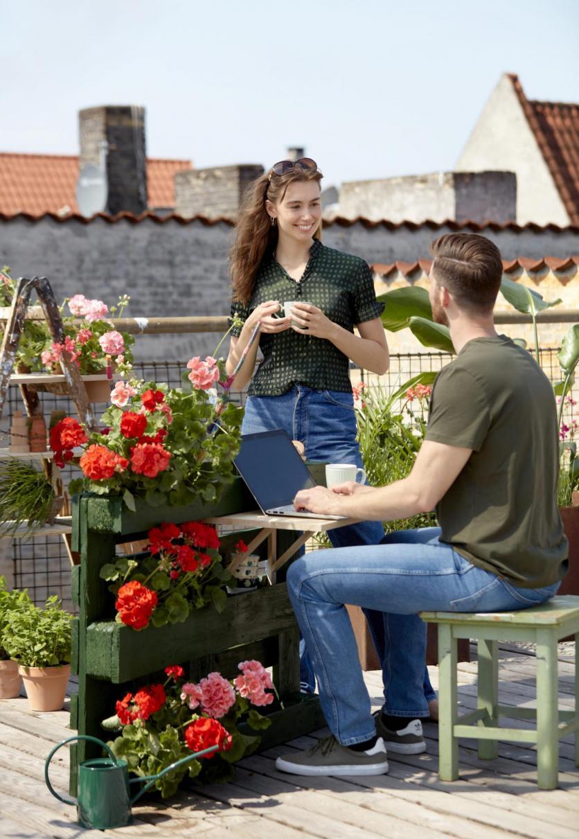muskátli, kert, balkon, kertészkedés, Pelargonium for Europe, virágok, terasz, ültetés