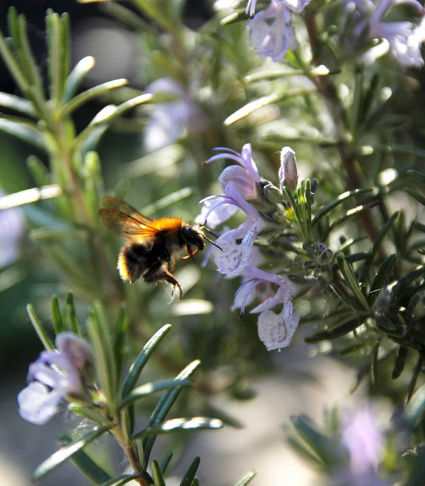 kert, méh, nyár