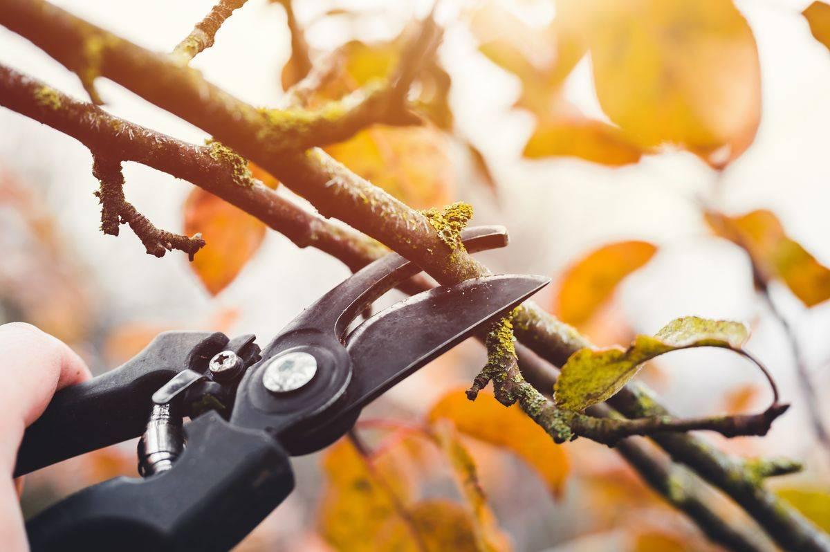 metszés, kertészkedés, ősz, faág