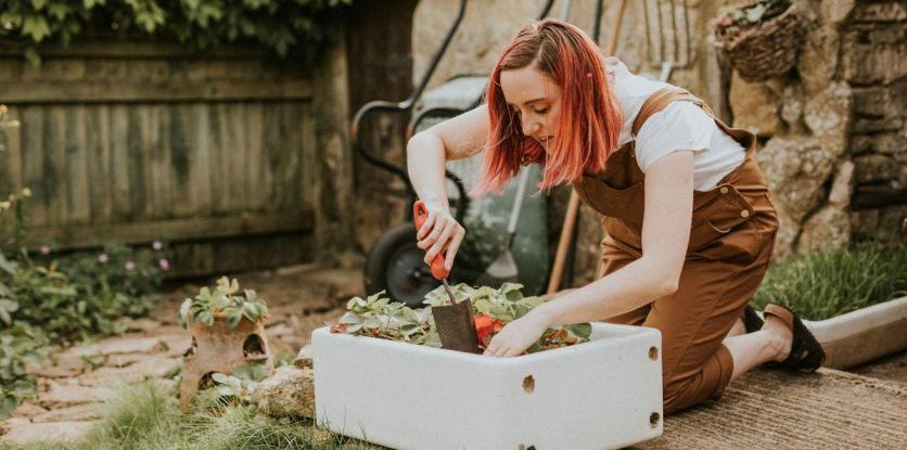 kertészkedés, konyhakert, kert