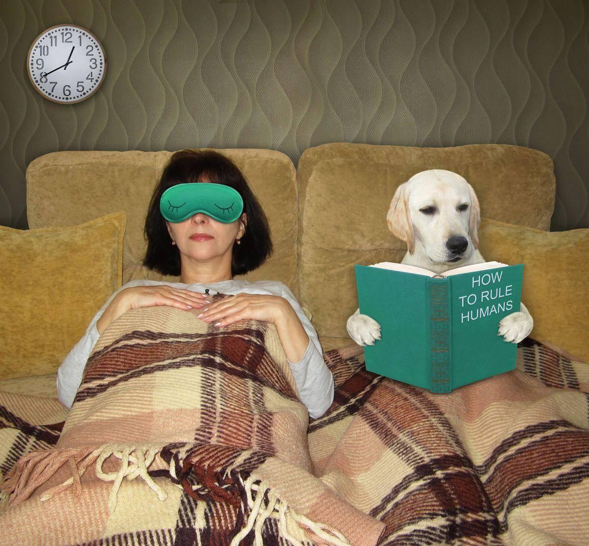 kutya, ágy , házi kedvenc, franciaágy