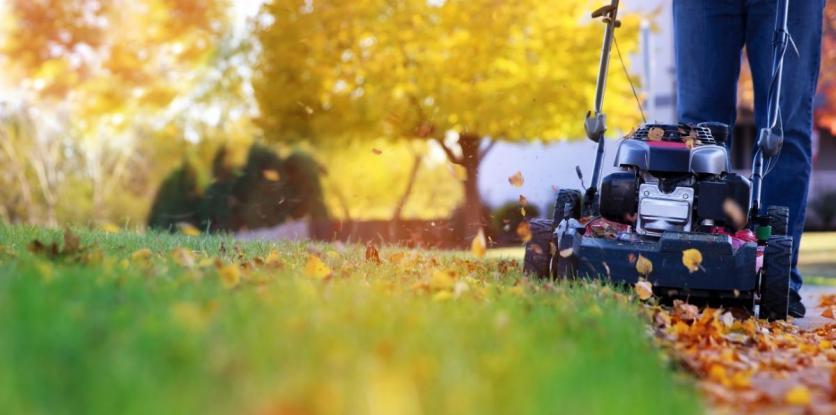 fűnyíró, ősz, gyep, zöld