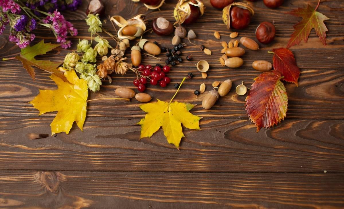 termések, őszi, falevél